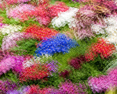 Flower garden with bright colors, Multiple exposure with slight movement