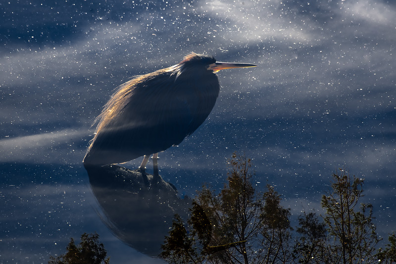 HERON AT NIGHT ON WATERS,  SKY, AND REFLECTIONS