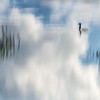 DUCK FLOATING ON WATERED SKIES