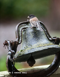 MANY BIRDS  STOP, LIKE THIS JUNCO, TO PERCH ON THIS OLD SCHOOL BELL ON OUR FRONT PORCH TO VIEW THE FRONT GARDEN