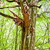 Sachsenwald_0511__LEB1276-Edit-Edit
