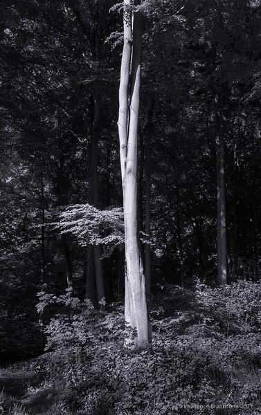 Sachsenwald_0512__LEB3644