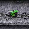 Sachsenwald_0512__LEB3686-Edit