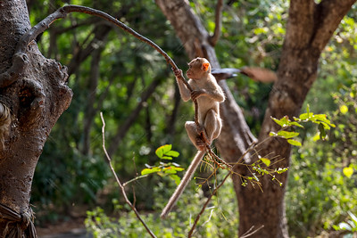 Kanheri Park monkeys