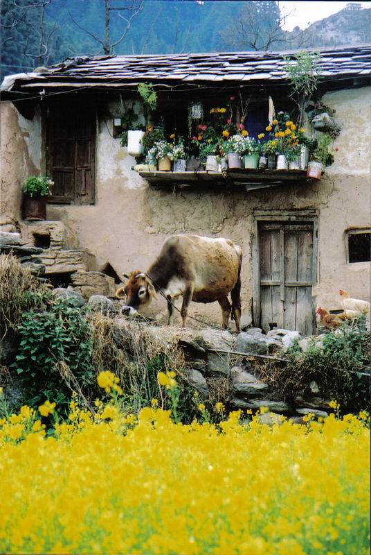 village in Himachal Pradesh