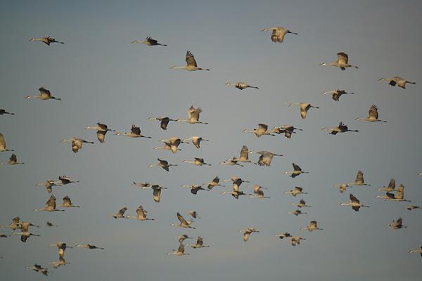 Indiana Birds