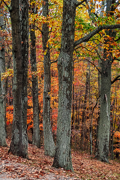 Fall Foliage - Brown County State Park