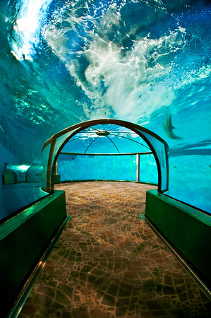 The Dolphin Tank at the Indianapolis Zoo