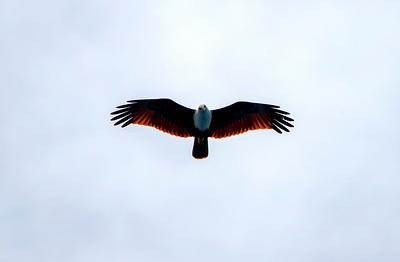 Banyaks Eagle