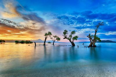 Scar Reef mangroves