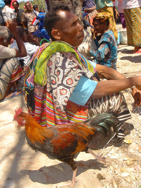 Man at market with chicken on a leash, XXX, West Timor, Indonesia