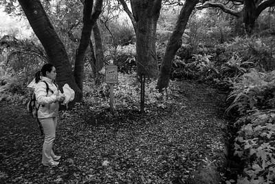 Hazelnut Trail, San Pedro Valley Park - December 27th 2014