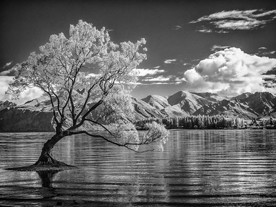 Wanaka Tree - Infrared