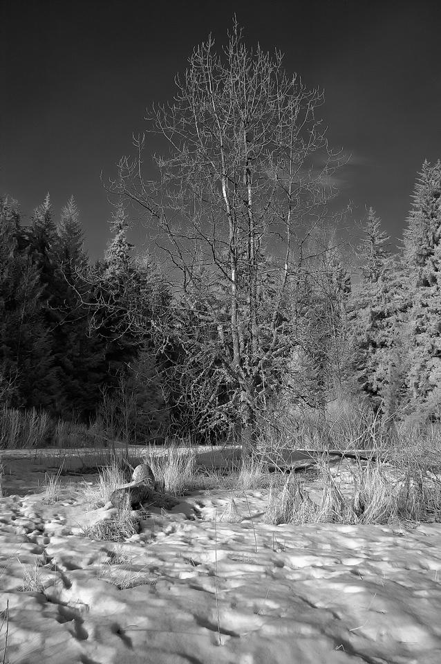 Infrared Photograph via Life Pixel converted super color IR Nikon d70s