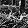 Kepler Trail Ferns