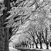 Kingston Lacey Trees