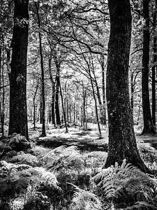 White Moss Woods