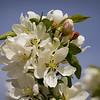 springbloom-00821