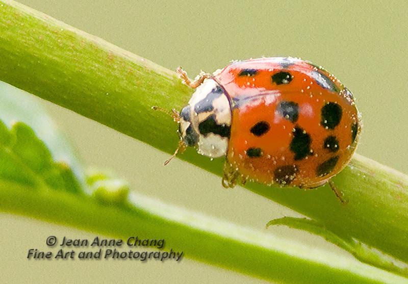 Ladybug crawling on stem