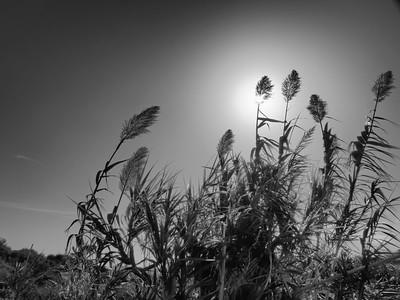 A l'ombre, en Crète
