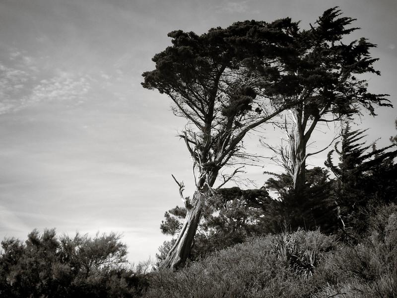 Le vent dans les pins, Pornic
