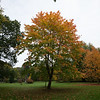 Emo gardens tree in Autumn colour