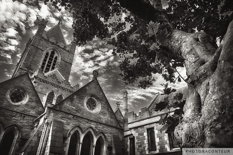 Maple Tree & The Bell Tower