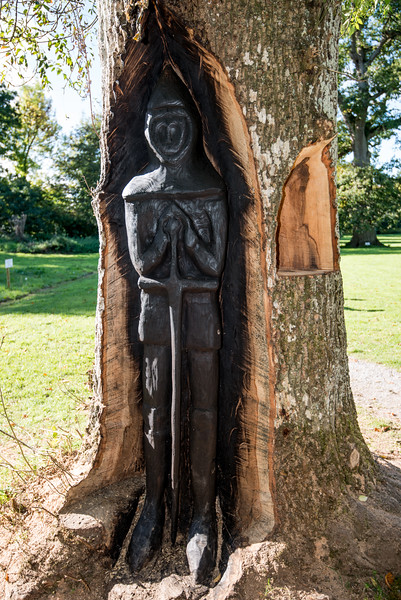 carving in a tree