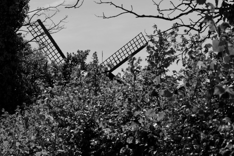 Bembridge windmill hiding in the undergrowth.