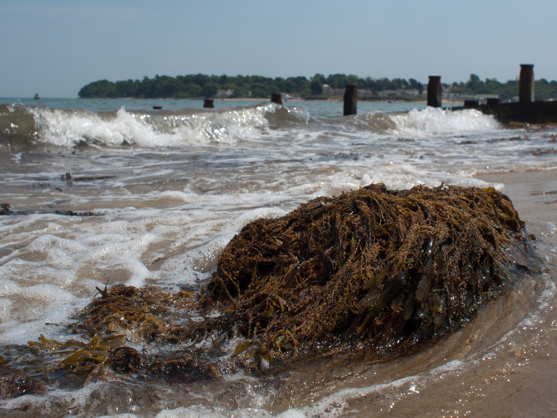 Waiting for the afternoon ferry, decided to take a walk along he beach when I saw this seaweed.