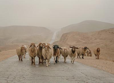 Exodus, Nabi Musa 2011