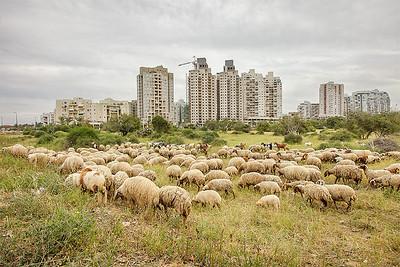 Ashkelon 2014