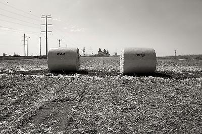 Cotton field near Yavne 2014
