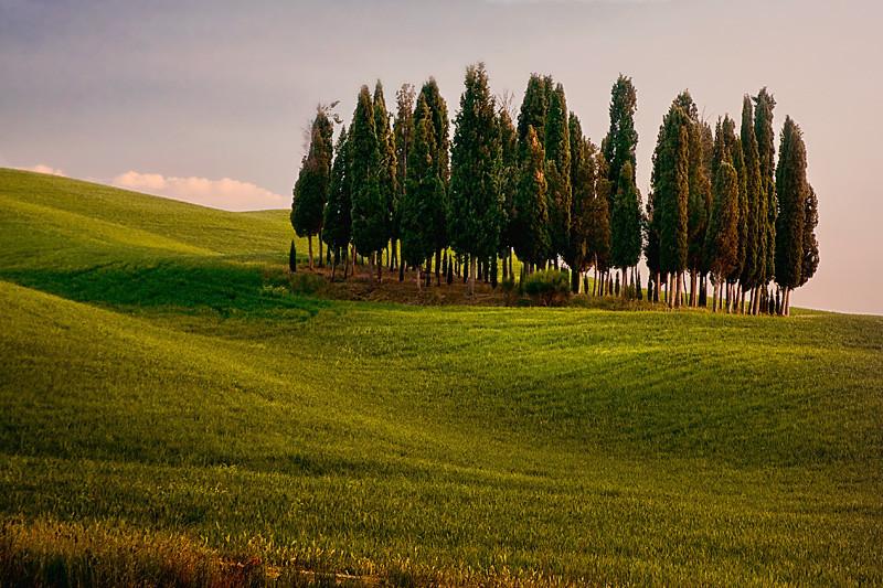 Tree Stand - Tuscany