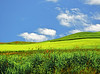 The Palouse 3