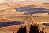 Palouse Autumn