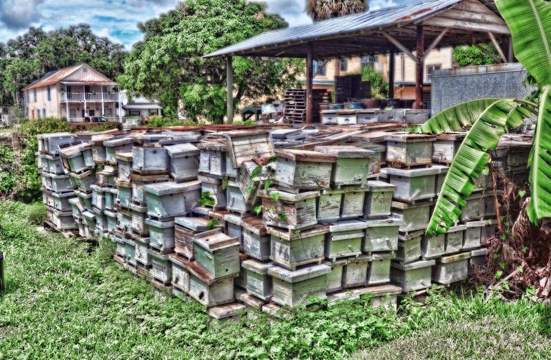 Bee Homes