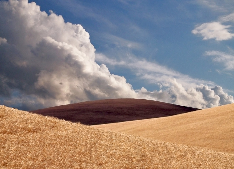Harvest Contrast<br /> The Palouse<br /> Washington, USA