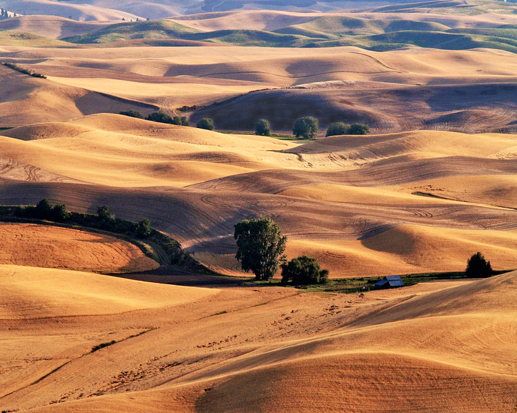 "Palouse Shadows<br /> <a href=""http://www.sevenwondersofwashingtonstate.com/the-palouse.html"">http://www.sevenwondersofwashingtonstate.com/the-palouse.html</a>"