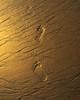 "Footprints in the Sand<br /> <a href=""http://www.footprints-inthe-sand.com/index.php?page=Poem/Poem.php"">http://www.footprints-inthe-sand.com/index.php?page=Poem/Poem.php</a>"