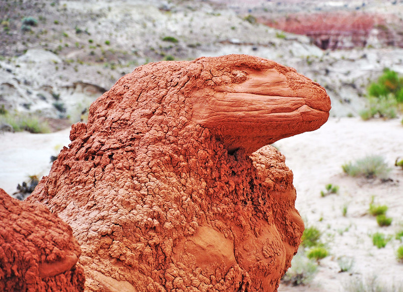 Stone Dragon<br /> Near Page, AZ<br /> Grand Staircase Escalante National Monument - Utah