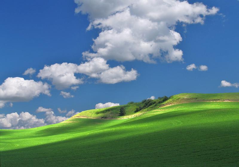 Field of Dreams<br /> The Palouse<br /> Washington, USA