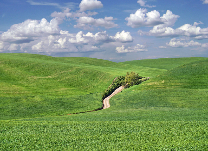 """Country Road<br /> <a href=""""http://www.sevenwondersofwashingtonstate.com/the-palouse.html"""">http://www.sevenwondersofwashingtonstate.com/the-palouse.html</a><br /> Washington, USA"""