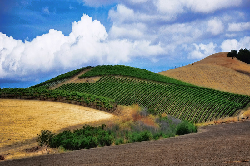 Wine Country<br /> Central California