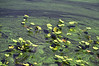 Algae Blooms 2