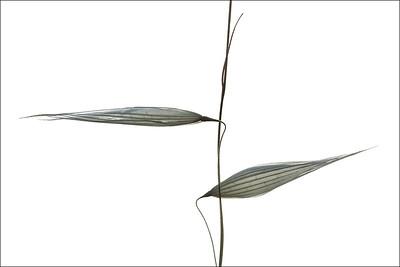 Images from folder JPEG