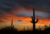 """Saguaro Sunset""<br /> Saguaro National Park AZ.<br /> copyright Jack Nordeen 2009<br /> Sizes & Prices 8x10 $75.00, 11x14 $125.00, 16x20 $175.00 Photo only, Custom Framing available. Larger Sizes available to 48x72 with most images"