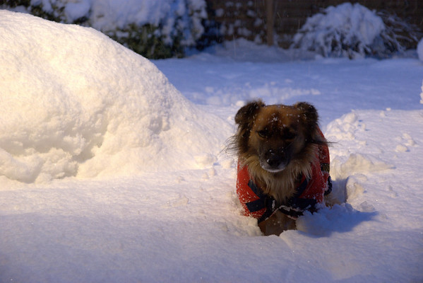 January Snow 2010