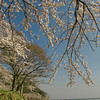 Kaizu Osaki, at the northernmost part of Lake Biwa. It took 2 hours on a motorcycle to get here from Kyoto, but the weather was amazing, and the sakura in full bloom.