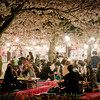 Cherry blossom festivities at Maruyama Park.